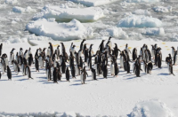Penguins, courtesy of RGS