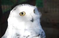 Nigel Palmer owl