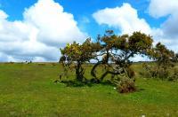 Bodmin Moor
